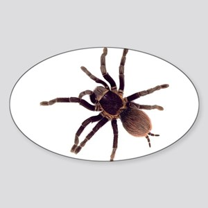 Hairy Brown Tarantula Sticker