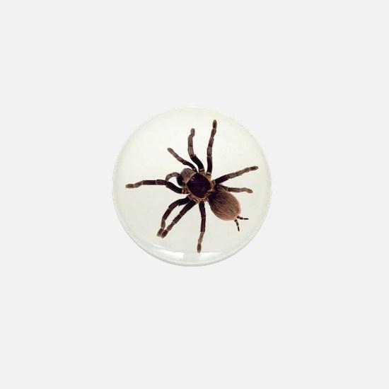 Cute Arachnid Mini Button
