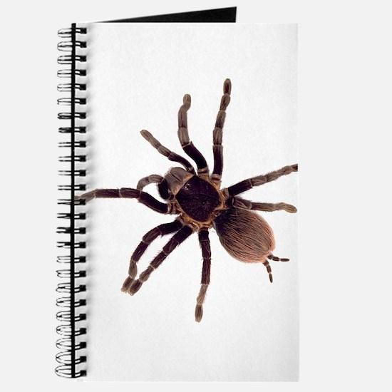 Cute Arachnid Journal