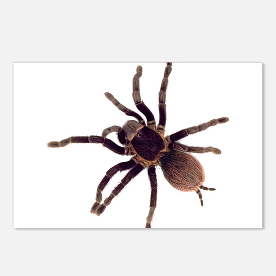 Cute Spider Postcards (Package of 8)