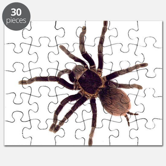 Unique Insect Puzzle