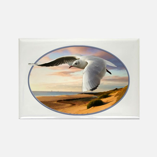 gull on the wing over beach Magnets