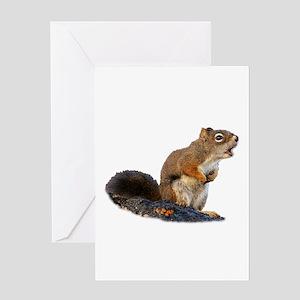 Singing Squirrel Greeting Cards