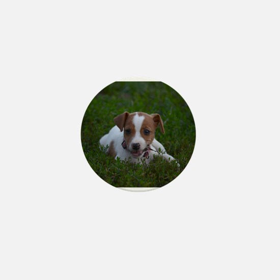 Cute Jack russell Mini Button