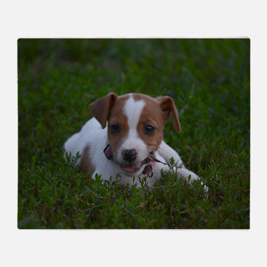 Funny Jack russell Throw Blanket