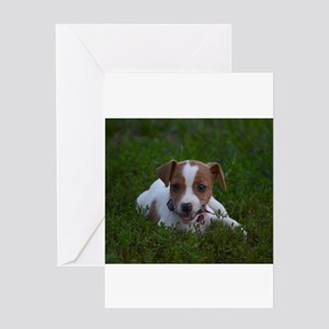 Jack Russell Puppy Greeting Cards