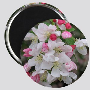 Cherry Blooms Magnet
