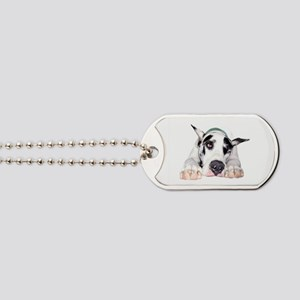 Great Dane Shy Harlequin Dog Tags