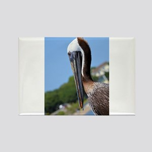 Pelican Smiling Magnets