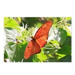 Orange Butterfly Aglow Postcards (Package of 8)