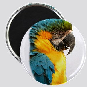 Macaw, Yellow and Gold Magnets