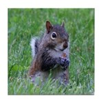 Nibbling Squirrel Tile Coaster