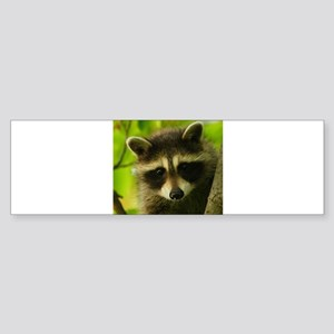 raccoon Bumper Sticker