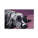Black Labrador Beauty Sleep Rectangle Magnet
