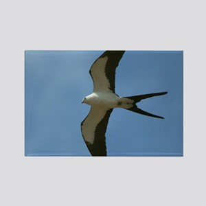 Swallow-tailed Kite Magnets