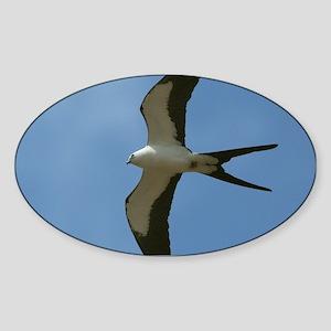 Swallow-tailed Kite Sticker