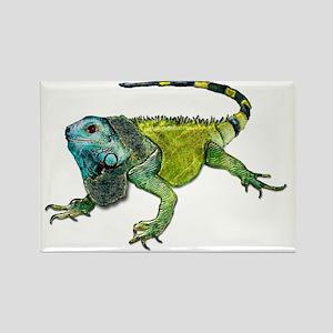 Gorgeous Green Iguana Magnets