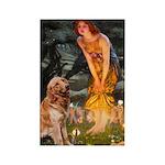 Fairies & Golden Rectangle Magnet (10 pack)