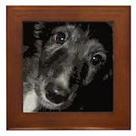 Silken Puppy Love Framed Tile