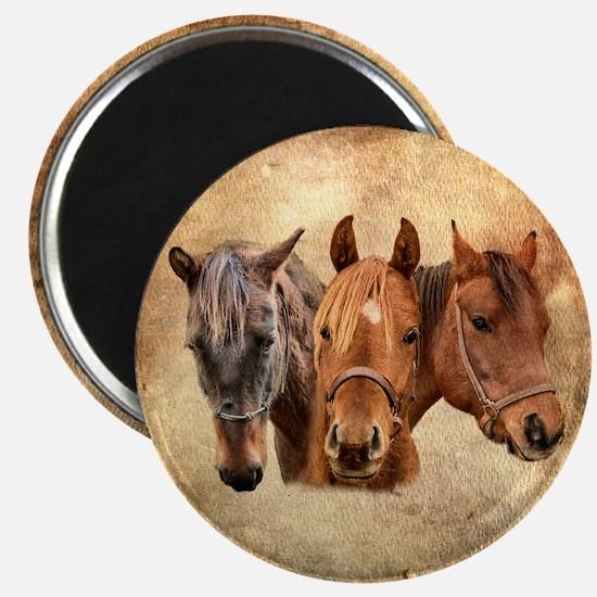 Cute Quarter horse Magnet