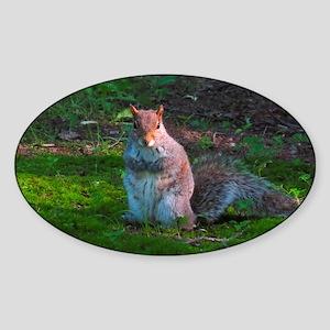 Grey Tree Squirrel Sticker