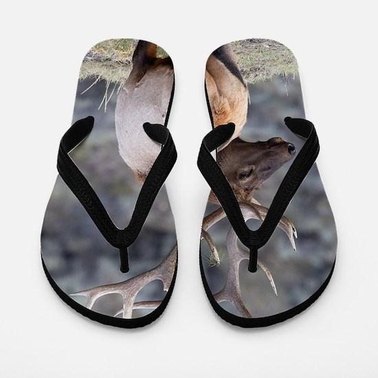 Funny Elk Flip Flops