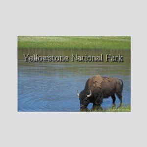 Wild American Buffalo in Yellowstone National Park