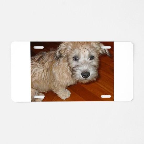 Glen_of_Imaal_Terrier wheaton Aluminum License Pla