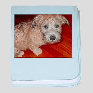 Glen_of_Imaal_Terrier wheaton baby blanket