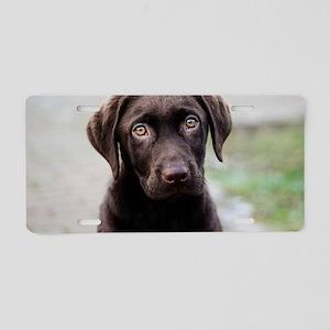 Chocolate Labrador Puppy Aluminum License Plate