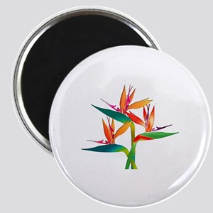 Birds of Paradise Trio Magnets