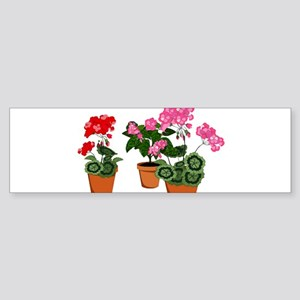 Planters of Mixed Geraniums Bumper Sticker