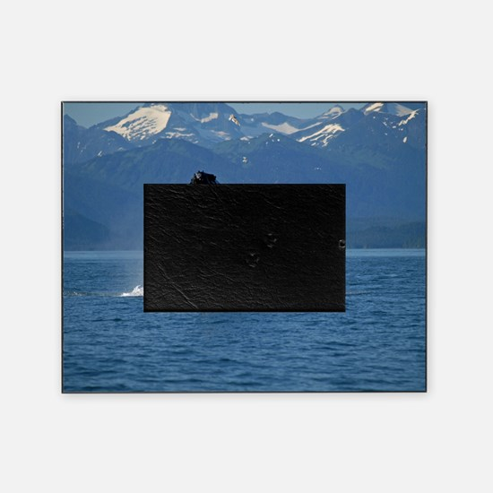 Humpback Whale Breaching Alaska Picture Frame