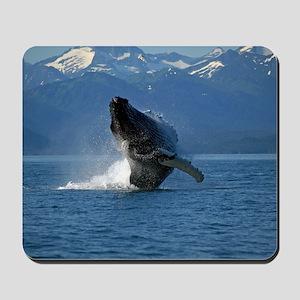 Humpback Whale Breaching Alaska Mousepad