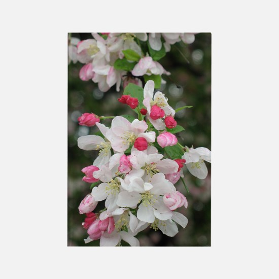 Cherry Blooms Rectangle Magnet