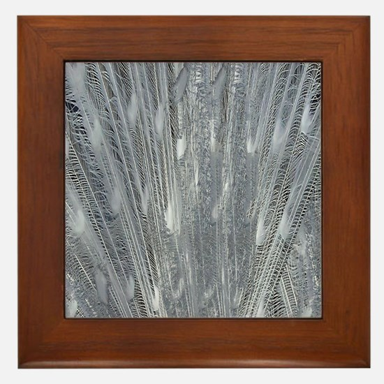 Silver Peacock Feathers Framed Tile