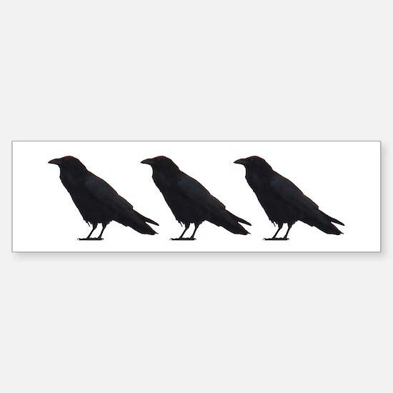 Black Crows Bumper Bumper Bumper Sticker