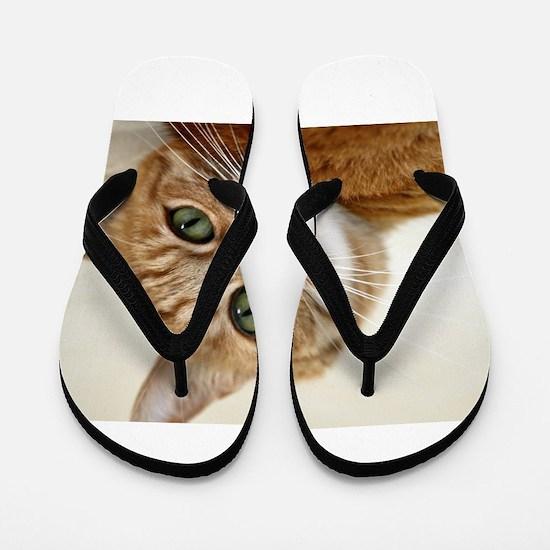 Funny Black and white tuxedo cat Flip Flops