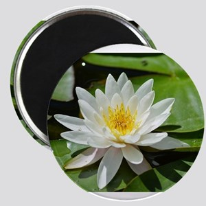 White Lotus Flower Magnets