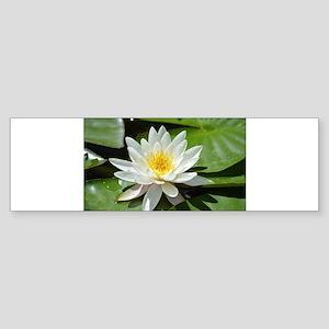 White Lotus Flower Bumper Sticker