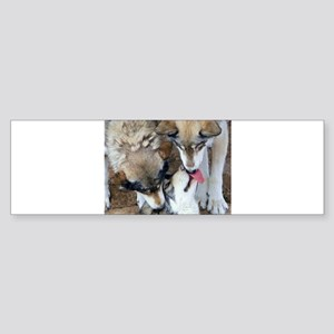 Wolf Greetings Bumper Sticker