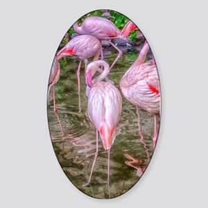 Pink Flamingos Sticker (Oval)