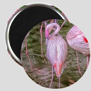 Pink Flamingos Magnet