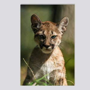 Lion baby Postcards (Package of 8)