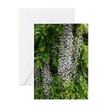 Wisteria Greeting Cards