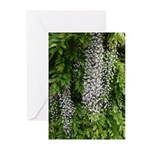 Wisteria - Pack Of 10 Greeting Cards