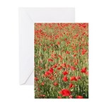 Poppies Greeting Cards - Pack Of 10