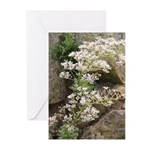 Saxifrage Greeting Cards - Pack Of 10