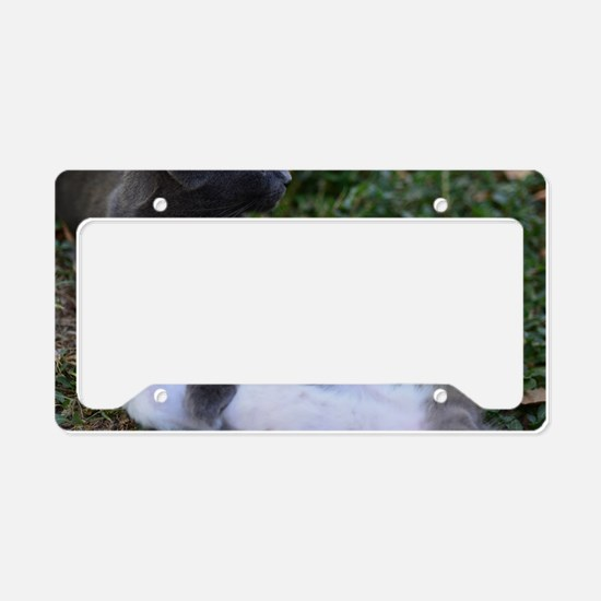 Playful Cats License Plate Holder