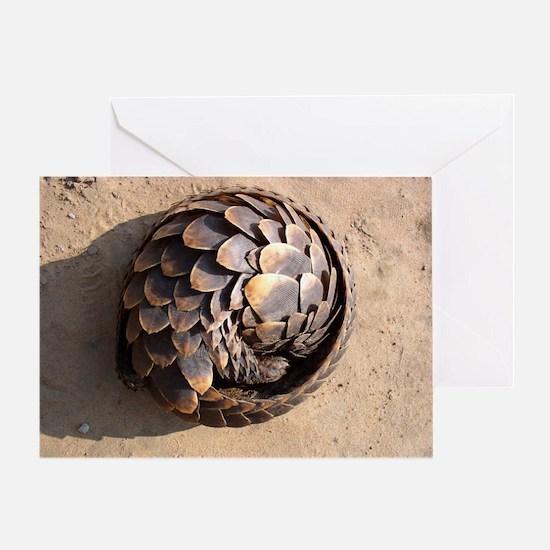 curled up pangolin Greeting Card
